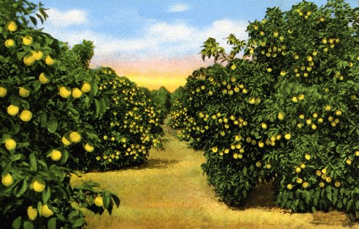 A classic vintage image of a fruit orchard