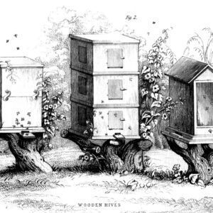 bees and honey 12