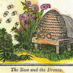 bees and honey 13