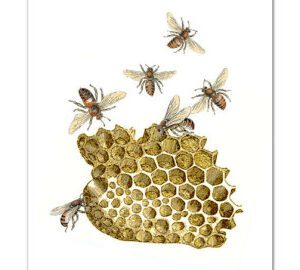 bees and honey 2