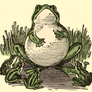 public domain frog illustration 16