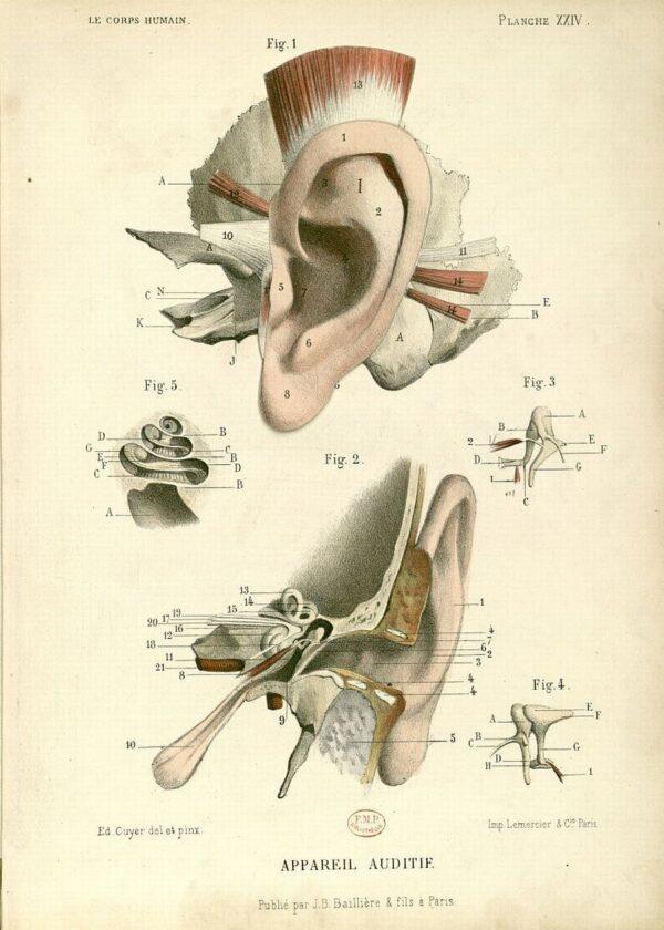 Le corps humain, structure et fonctionsEdition : Paris : J.-B. Baililère, 1879