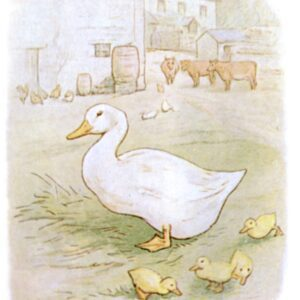 free public domain vintage illustration of ducks 5 beatrix potter