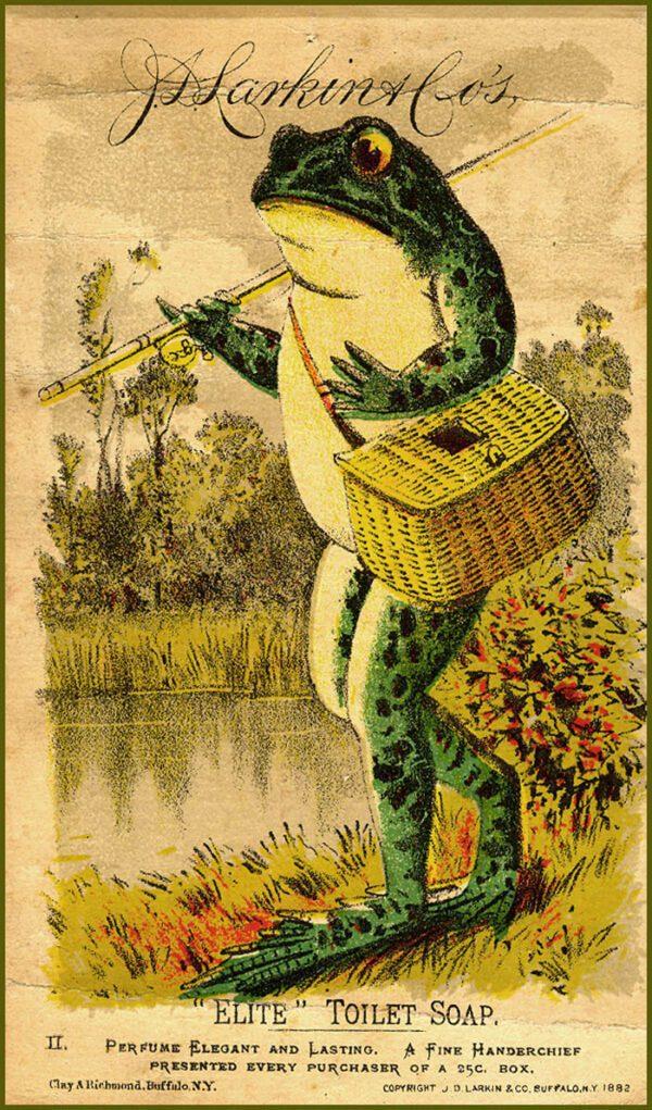frog walking