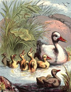 public domain vintage childrens book illustration of a mother duck and her ducklings