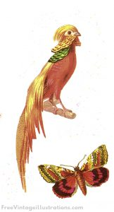 vintage clipart exotic bird and butterfly