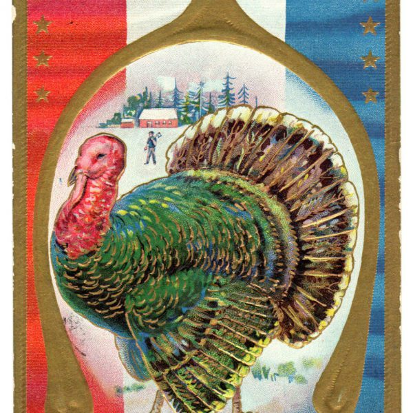 antique thanksgiving postcard public domain image