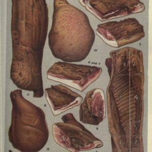 public domain vintage color illustrations of food and sliced butcher meat