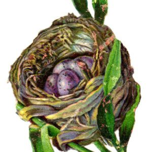 free vintage illustration of birds nest with purple eggs
