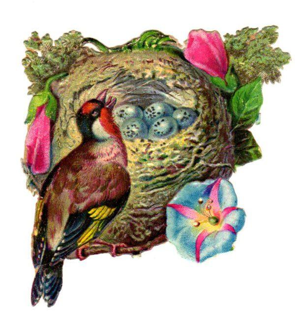 free vintage illustration of wild birds nest and eggs