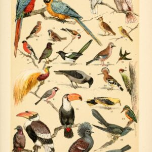 free vintage illustrations of wild animals birds image 4