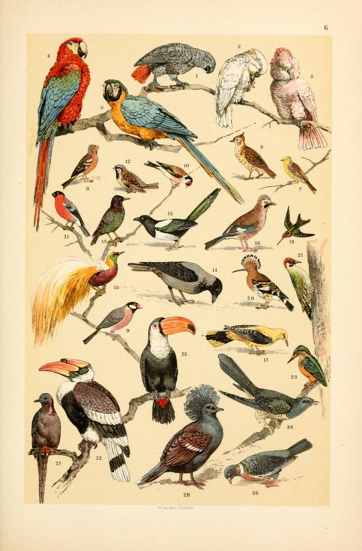 free vintage illustrations of wild animals birds image 4