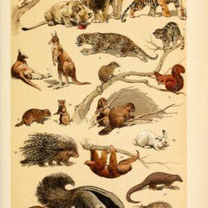 free vintage illustrations of wild animals image 2