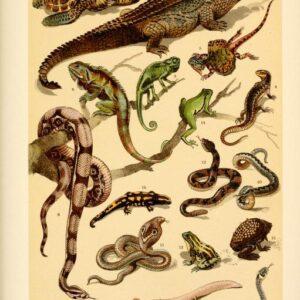 free vintage illustrations of wild animals reptiles