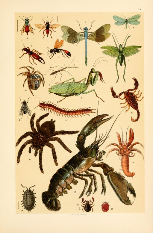 free vintage illustrations of wild insects image 2