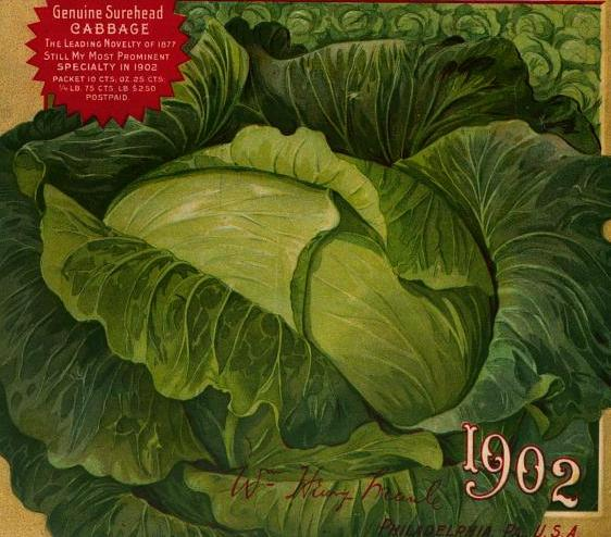 free vintage color illustration of cabbage seed catalog