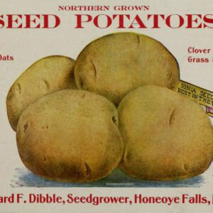 free vintage color illustration of potatoes