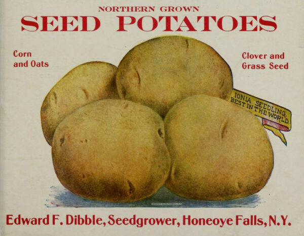free vintage color illustration of potatoes