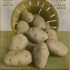 free vintage illustration of potato advertisement1