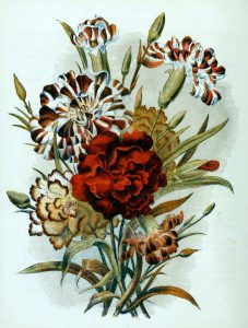 This is a free vintage book illustration of country flowers