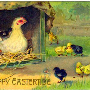 free vintage easter illustration of chicken chicks eggs from antique postcard