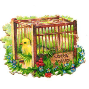 free vintage easter illustration of yellow bird in birdcage with flowers