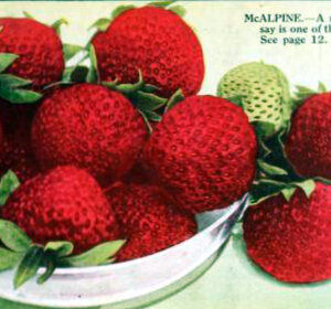 antique box of fresh strawberries
