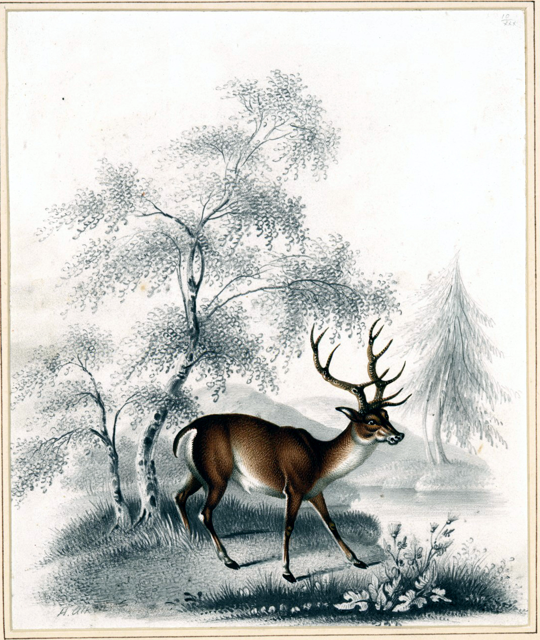 Free vintage illustration of a lone deer in the woods