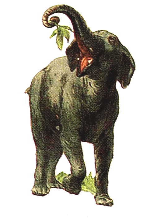Vintage illustration of elephant from 19th century advertisement