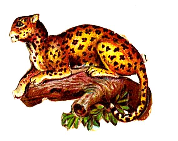 Public domain illustration of Leopard - 19th century scrap paper