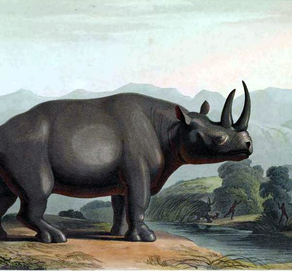 vintage rhino color illustration