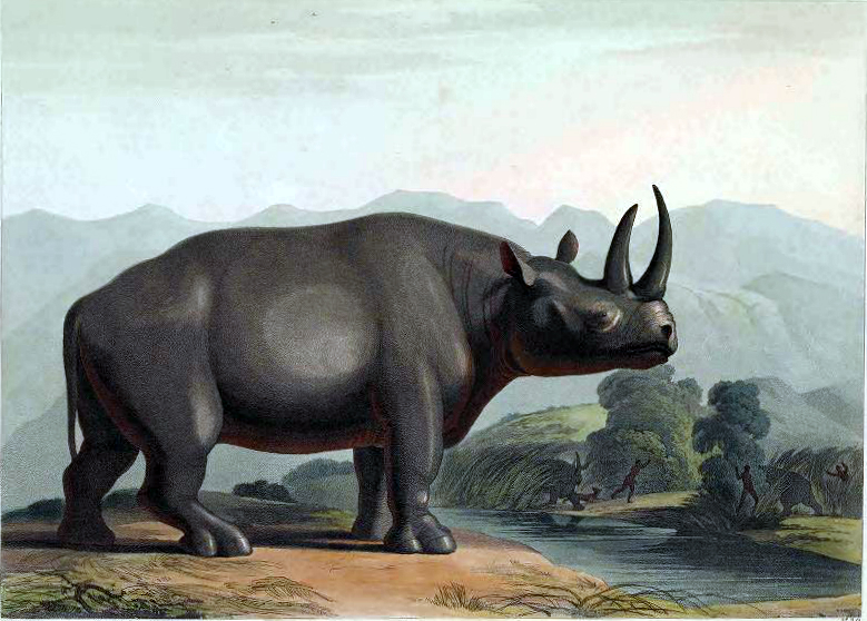 19th century color illustration of a rhinoceros in Africa