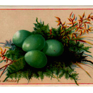 Vintage bird nest clipart with green eggs and ferns