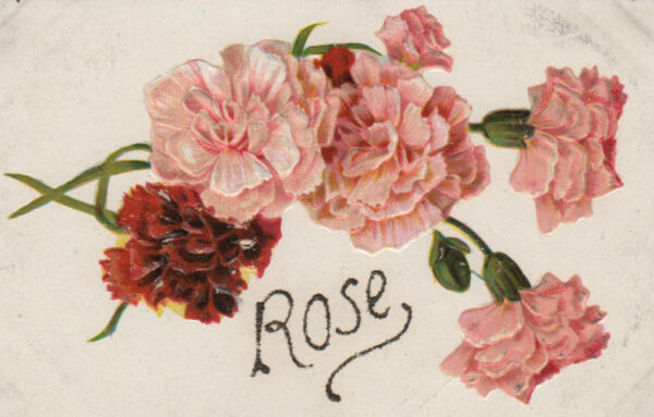 19th 20th century valentines day pictures rose card