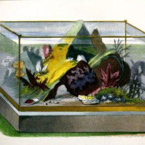 Antique aquarium illustrations from 19th century public domain