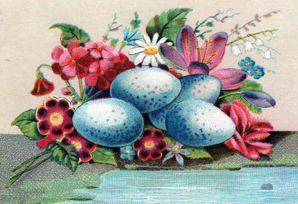 vintage nature illustrations blue eggs