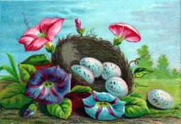 vintage nature illustrations colorful eggs