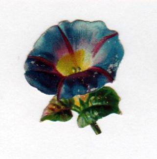 vintage nature illustrations petunia