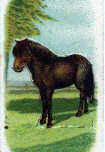 vintage nature illustrations pony