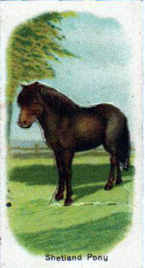 vintage nature illustrations pony