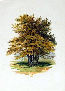 tree illustration autumn