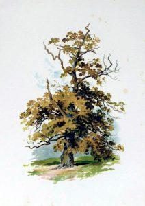 tree illustration golden