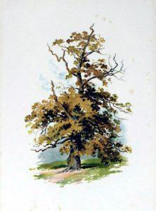 tree illustration golden autumn