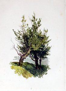 tree illustration lush green