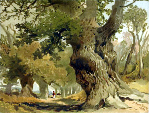 tree illustration sherwood forest