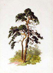tree illustration skinny