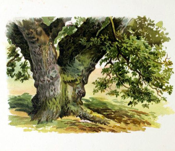 tree illustration spring