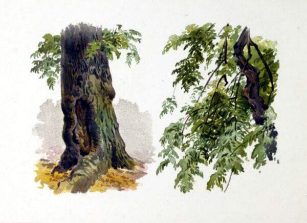 Free illustration of a 19th-century tree stump