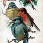 A free Christmas illustration of three colorful birds from an early 20th-century vintage greeting card.