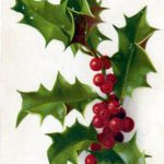 A free Christmas illustration of classic Holly and berries. From a public domain holiday card published in 1906.
